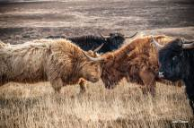 Julie Thomas 01