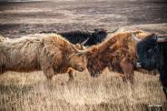 Julie Thompson 01