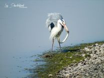 Les Shackleford 03