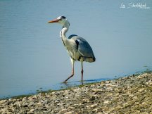 Les Shackleforth 01