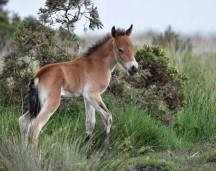 Linda Thompson 01