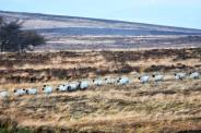 Linda Thompson 03