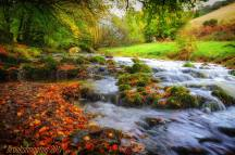 Michael Brooks 03