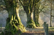 Richard Clements 01