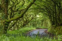 Steve Gunter 02
