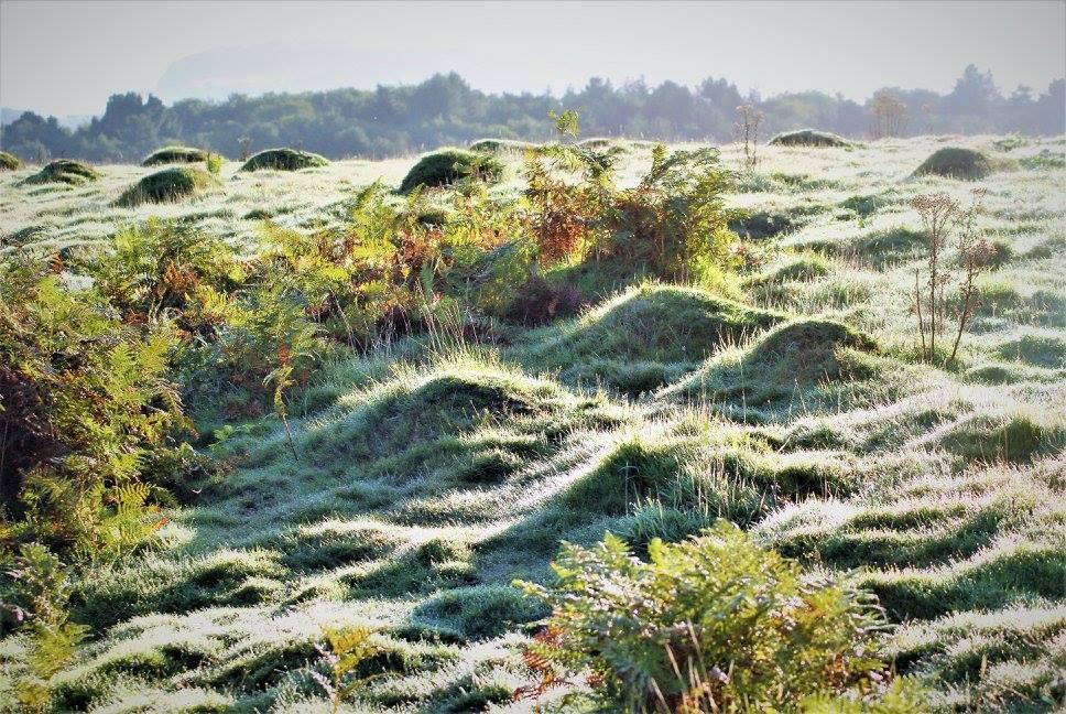 A frosty January Morning