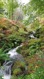 Elma Vonk, Waterfall in Horner Woods