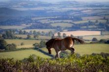 Ralph Ellis - Porlock Hill Pony